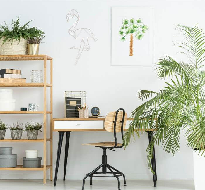 get plants for cleaner office air